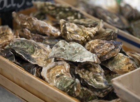 A Billion-Oyster Comeback